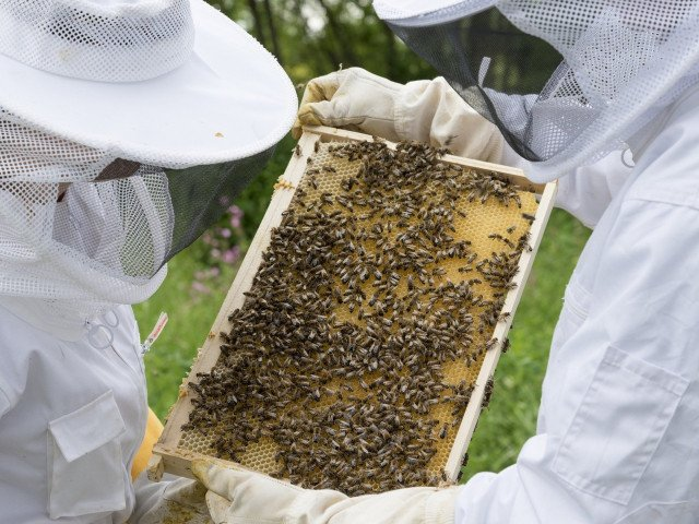 Beekeeper honey business